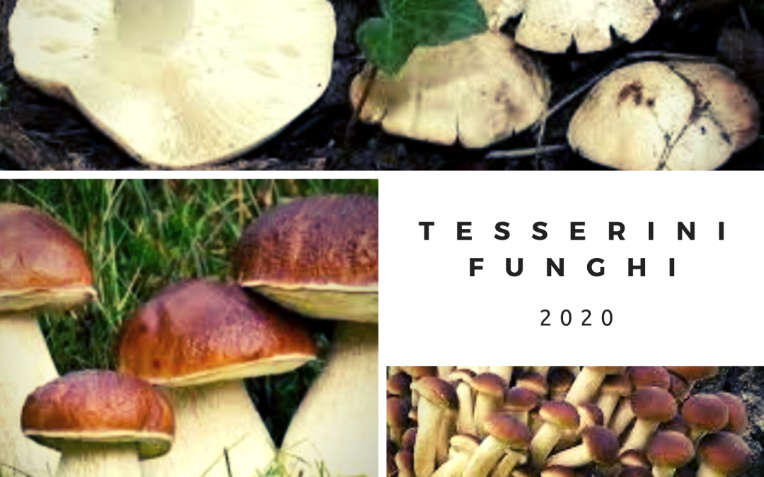 TESSERINI FUNGHI 2020